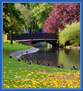 Красивый пруд, осень, мост, природа