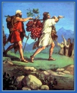 Земля обетованная, виноград, соглядатаи