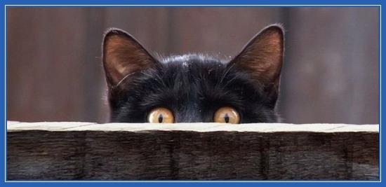 Кошка, черная, кот, котенок