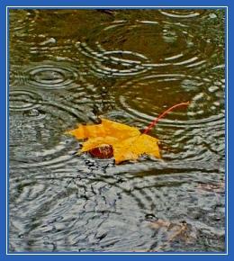 Осень, кленовый лист, желтый, лужа, дождь