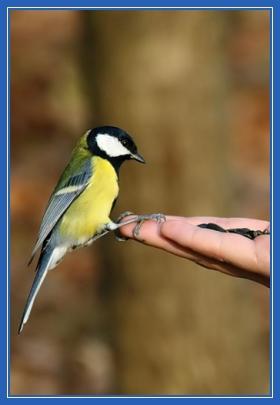 Птица (синица) на руке