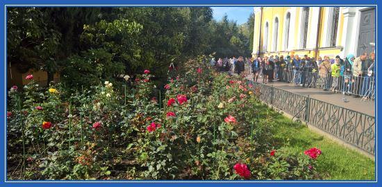Розы Покровского монастыря