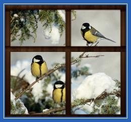 Зима, синицы