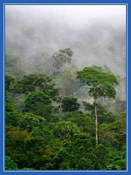 Дождевые леса,