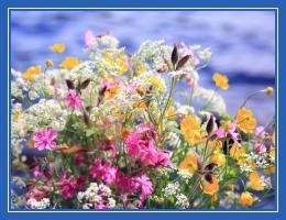 Полевые цветы, лето