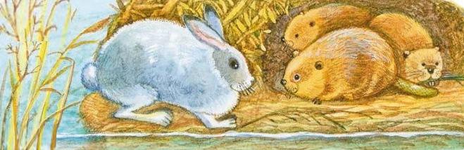 Заяц и бобры