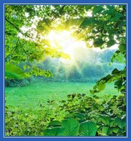 Летнее солнышко, лес