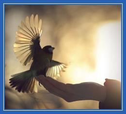 Любвоь, доверие, птица, на руках