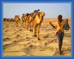 Пустыня, верблюды, песок