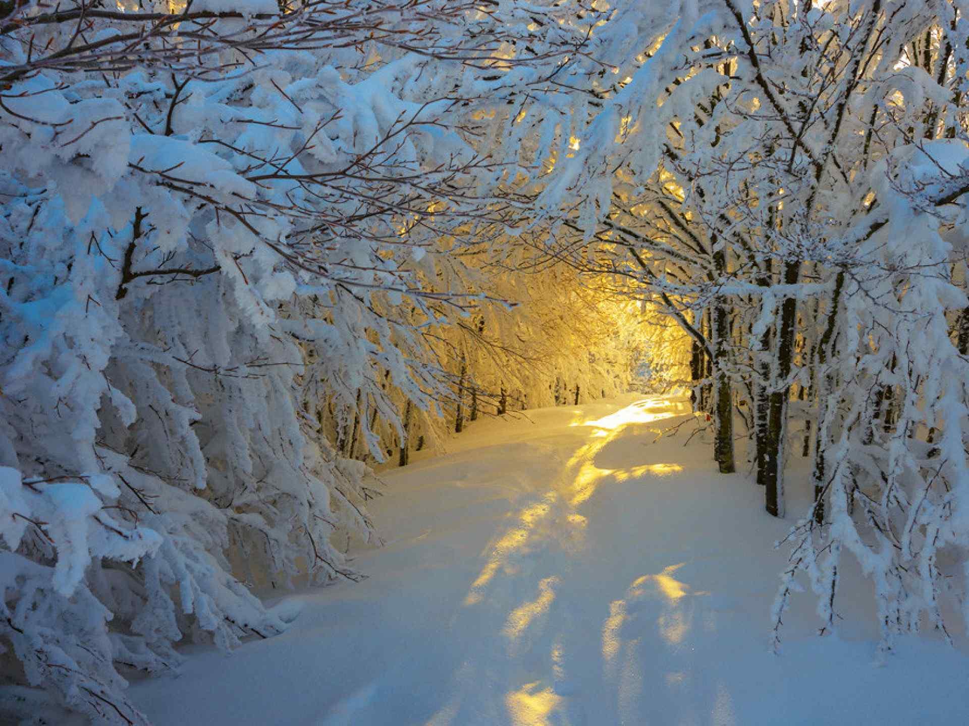 Зимняя тропа - к солнцу!