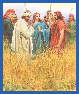 ученики срывают колосья, Иисус Христос, фарисеи