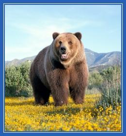 медведь, лето