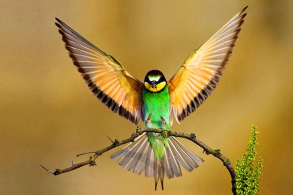 Почему Бог не дал крыльев человеку