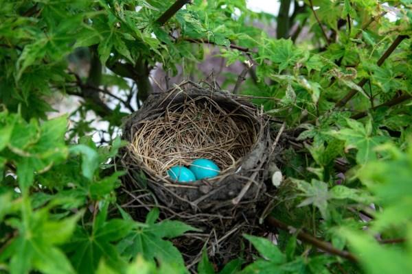 Разоренное гнездо