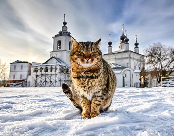 Светлый кот | Рассказ