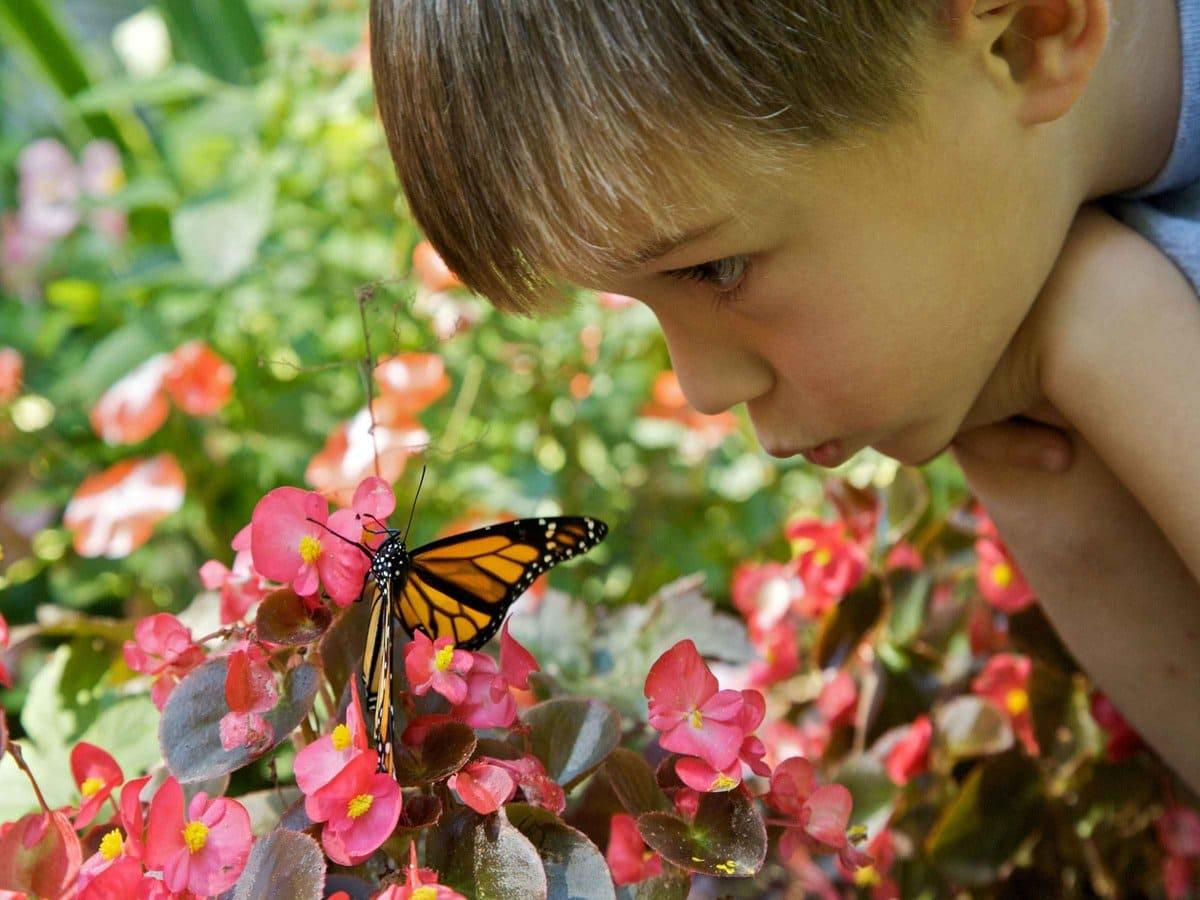 Цветы. Ребенок. Бабочка