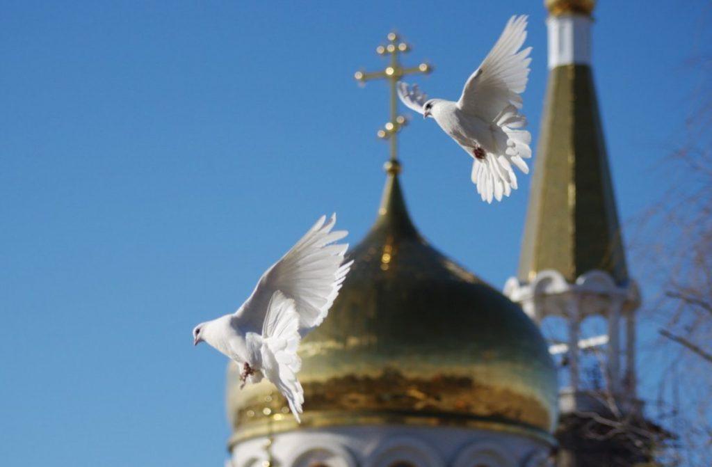 Под крыльями птицы