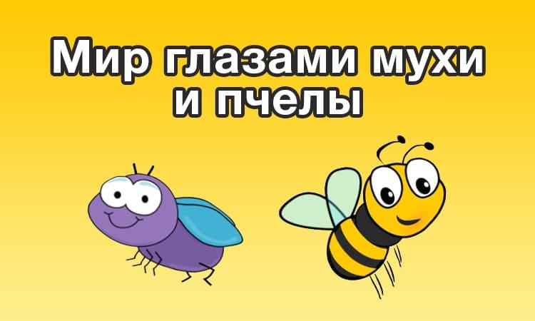 Мир глазами мухи и пчелы