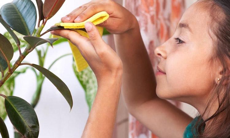 Уход за растениями, детский труд