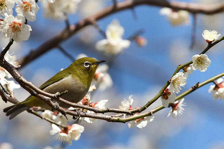Птица весной