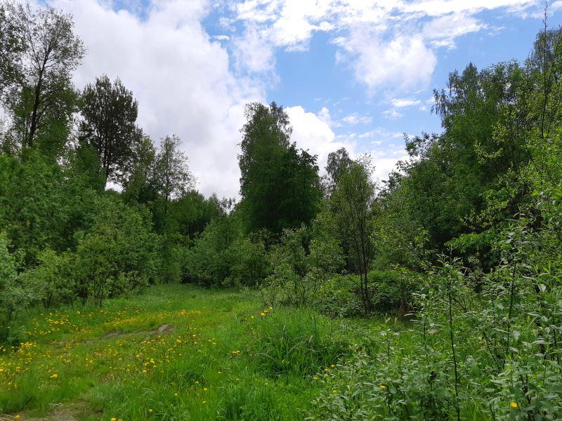 02. Придорожная лесная полянка