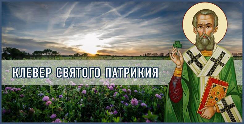 Клевер святого Патрикия
