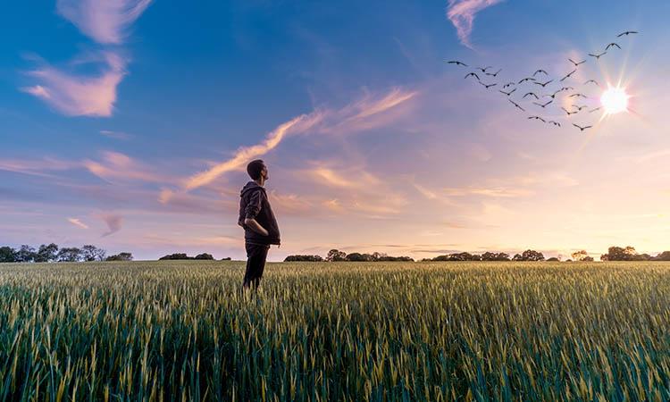 Мужчина в поле смотрит на птиц