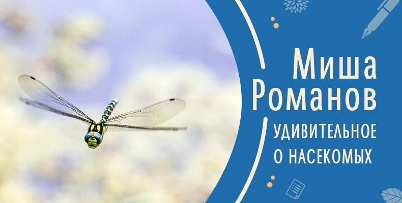 Удивительное о насекомых