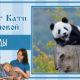Панды | Тест Кати Р.
