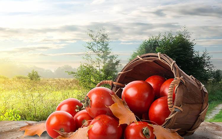 Корзина с помидорами