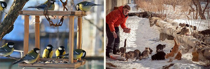 Помощь животным и птицам зимой