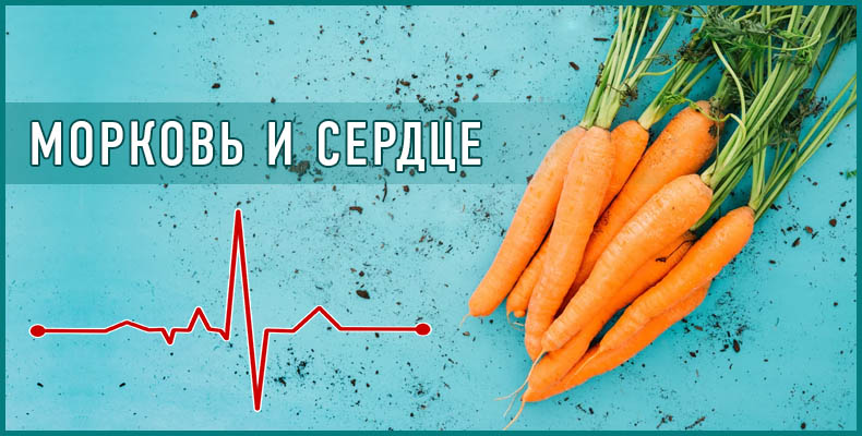 Морковь и сердце