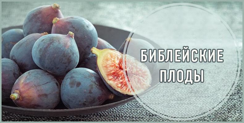 Библейские плоды
