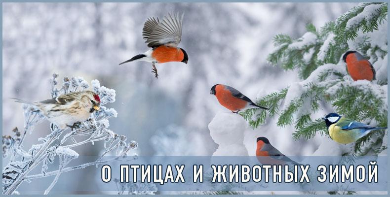 О птицах и животных зимой