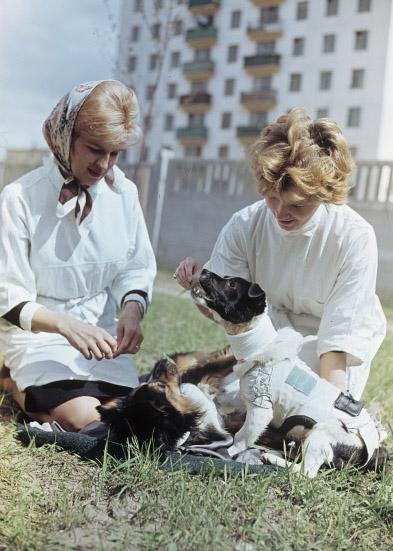 Собаки Ветерок и Уголек