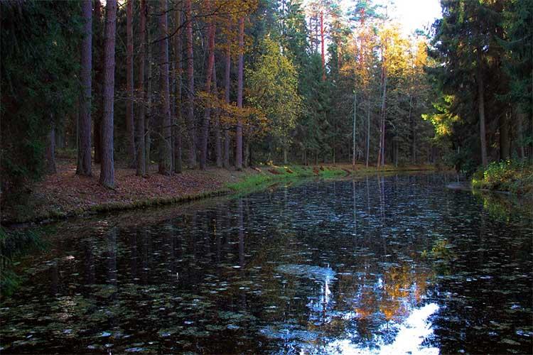 Черный пруд в Михайловском