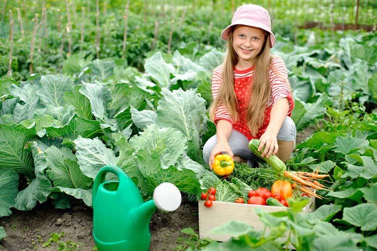 Девочка собрала урожай