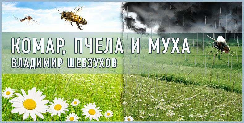 Комар, пчела и муха. Владимир Шебзухов
