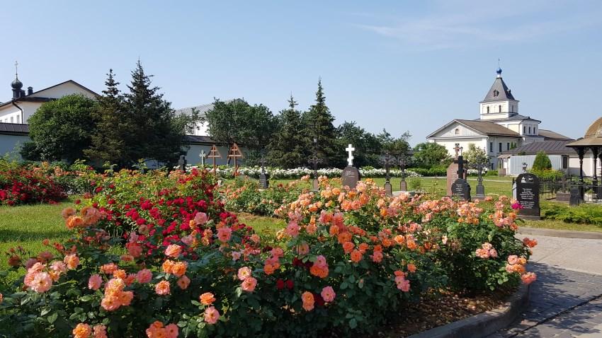 Красивые розы!