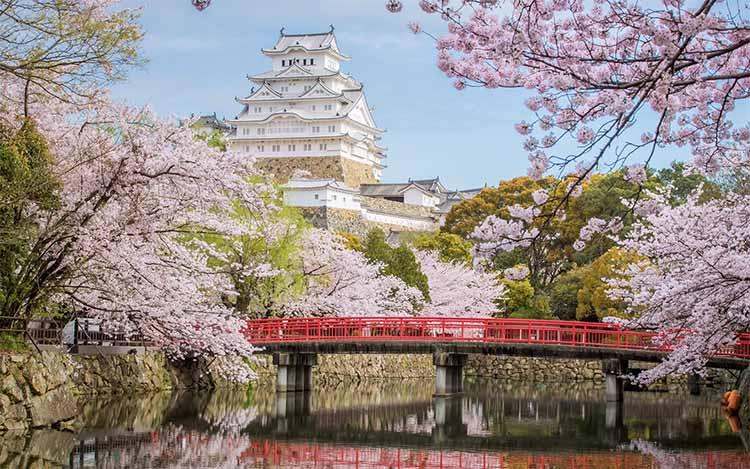 Сакуры в Японии