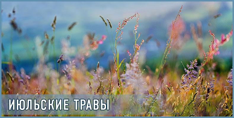 Июльские травы