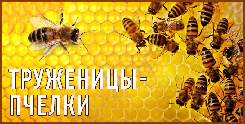 Труженицы-пчелки